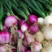 Onion Peelers