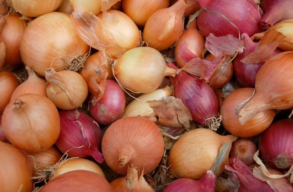 Why Do Some Onions Taste Bitter?