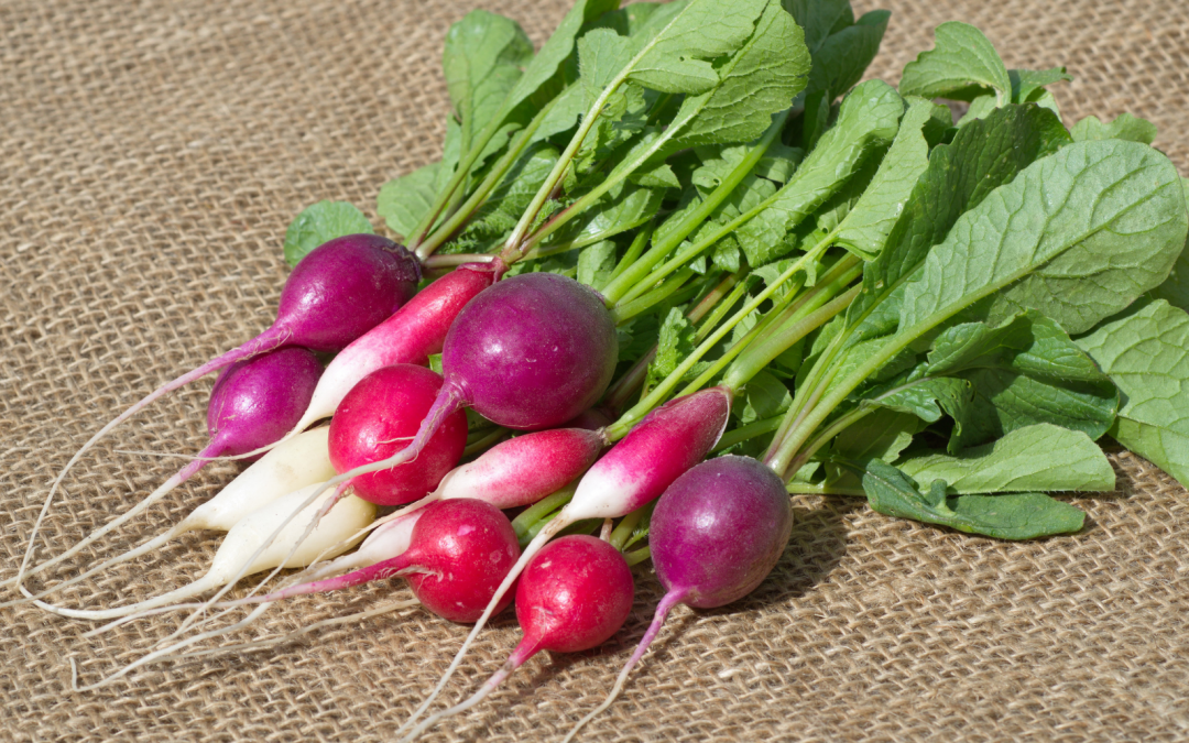 Are all types of radishes the same?